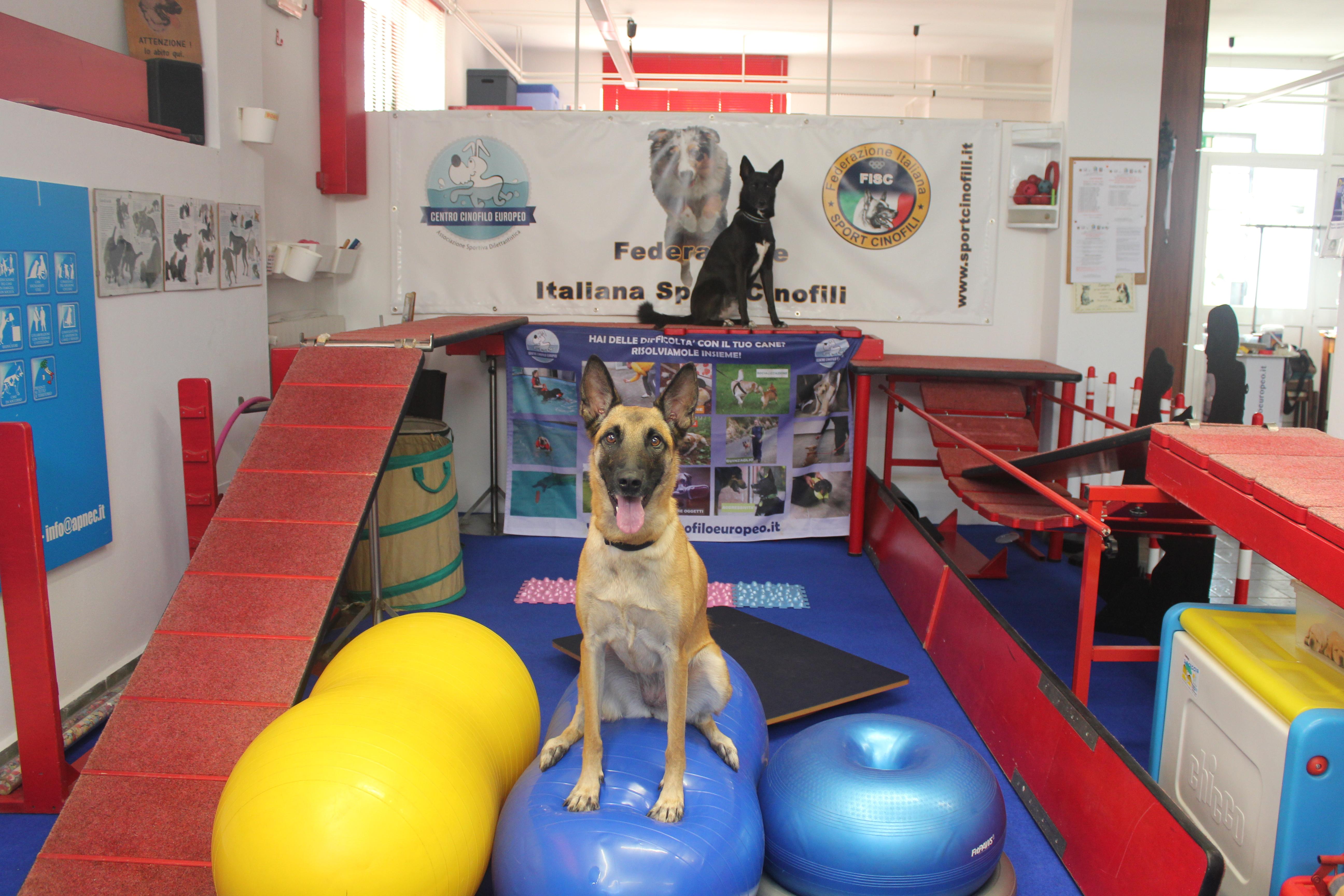 Centro Cinofilo Europeo Novate Milanese.Preparazione Atletica Per Cani Centro Cinofilo Europeo