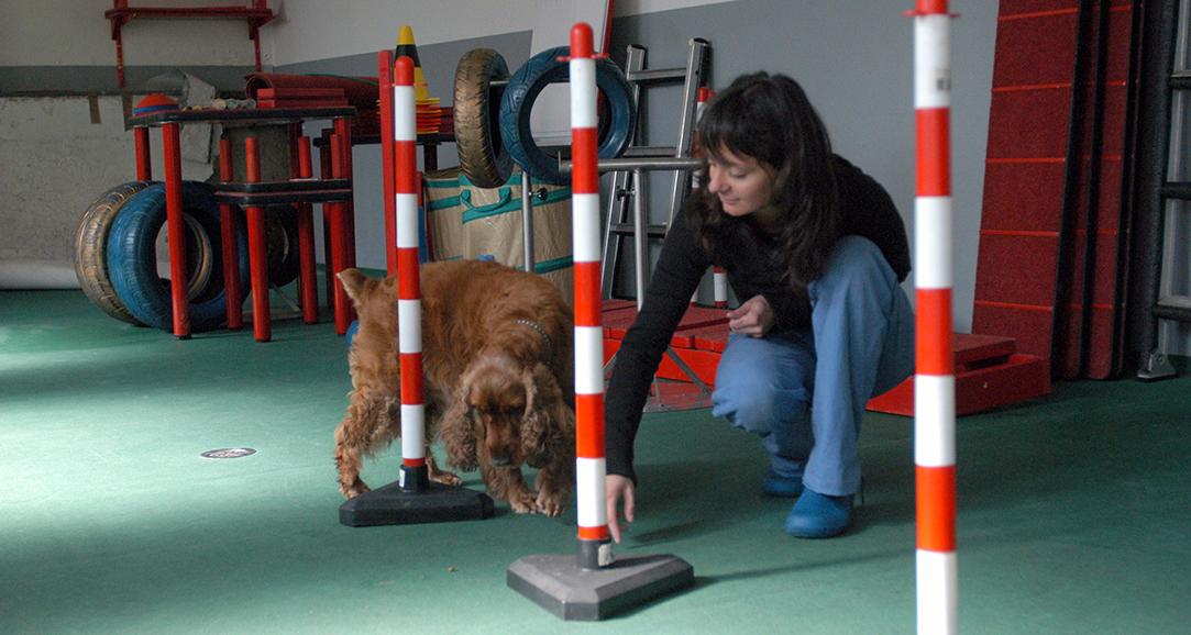 riabilitazione per cani