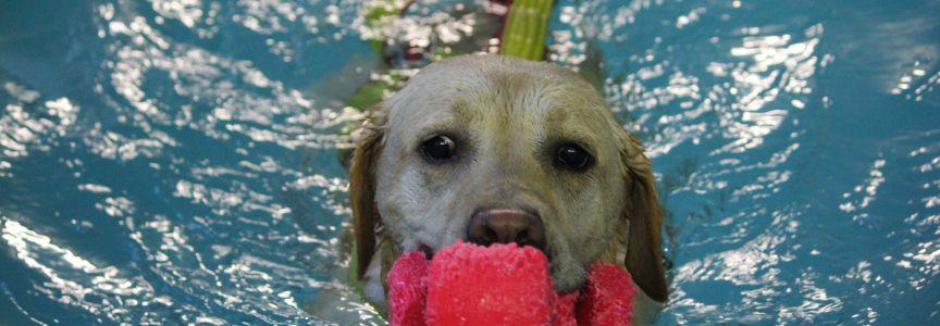 Piscina per cani centro cinofilo europeo for Piscina x cani milano